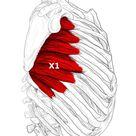 Serratus anterior Schmerzen & Triggerpunkte selbst behandeln