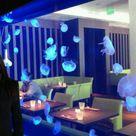 Jelly Fish Tanks