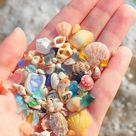 Tiny Sea Treasures