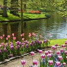 Take a look at the beautiful Keukenhof gardens in the Netherlands