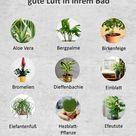 Dies 9 Pflanzen sorgen für gute Luft in ihrem Bad