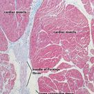 Study and Revise Histology Online with Meyer's Histology