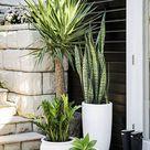 Pflanzkübel - echte Hingucker im Garten: 14 Tipps für beste Wahl - Garten, Trends - ZENIDEEN