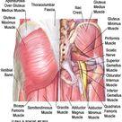 Yoga Anatomy Glues, Hamstrings, Adductors  Jason Crandell Vinyasa Yoga Method
