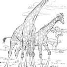 Art Therapy coloring page Africa : Giraffes 9