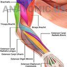 Human Anatomy Atlas, Anatomy Games and cards