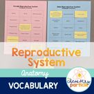 Reproductive System Vocabulary Practice