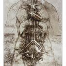 A1 Poster. Female anatomy