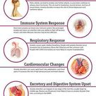 12 Effects of Anxiety on the Body