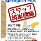 English Plus スタッフ英単語帳-94: pancreas