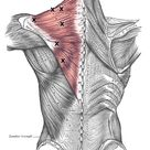 Trapezius Trigger Point Referral Patterns