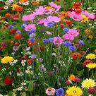 Field of Bouquet