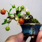Top 10 Smallest Bonsai trees