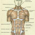 Full body muscles