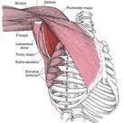 Shoulder Pain Relief, Including Frozen Shoulder - White Tiger Medicine