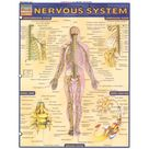 Nervous System, QuickStudy Chart