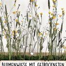 Blumenwiese mit getrockneten Wiesenblumen
