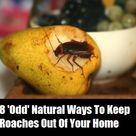 Roach Remedies