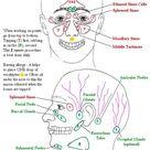 Sinus Problems, Sinusitis, Allergies, Headaches and Lymphatic Congestion. Sinus Chart. Philip Chave, Spiritual Healer