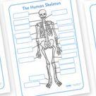 Human Skeleton Labelling Sheet