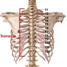 Spinal Stenosis - Narrowing of the Spine