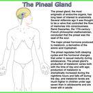 Melatonin Supplement To Open Pineal Gland - In5D
