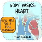Heart and Circulatory System (for Teens)