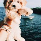 Crochet Dog Crochet Puppy Dog Crochet Pattern Dog Pattern | Etsy