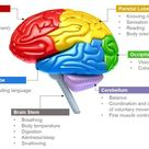 Science Photo: Parts of Brain and Its Functions