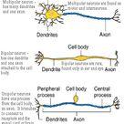 BIOL 237 Class Notes - Neurology