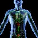 Understanding the Purpose of Lymph Nodes in the Body