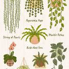 The 10 Best Indoor Hanging Plants to Turn Your Home Into a Jungle | Best indoor hanging plants, Hang