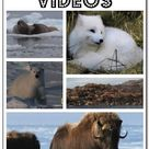 Videos Of Animals
