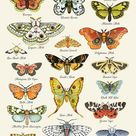 Moth Cards, Moth Chart Notecards, Naturalist Card Set, Insect, Moth Identification, Entomology, Science, Lepidoptery
