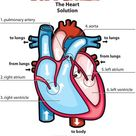Answers The Heart for Kids