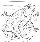 Amphibian coloring pages | Free Coloring Pages