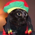 Cats In Costumes