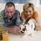 Rabbit with hairball that took up entire stomach is saved by pineapple juice