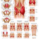 Understanding Low Back Pain Laminated Anatomical Chart