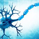 Blocking Protein Called SARM1 Seen to Protect Nerve Cells from...