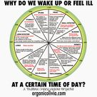 TCM Body Clock: Why Do We Wake Up or Feel Ill at a Certain Time of Day?