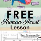 Human Heart Worksheets Easy Lesson Plan   Bless my Budget
