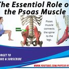 The Essential role of the Psoas Muscle   Psoas Muscle Tightness cause Low Back Pain   Psoas Stretch