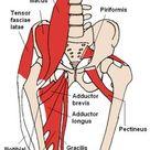 Schmerzen im unteren Rücken   Hüftbeuger dehnen Iliopsoas