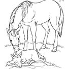 Horse Coloring Pages | Printable Mare and her sleeping foal Coloring Page