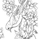 Spring Scenes Coloring Page 21 - Spring Robin Coloring Sheets: Bluebonkers