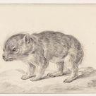 Jean Bernard, 1775 - Young bear - fine art print - Canvas print / 60x40cm - 24x16