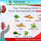Top 7 Amazing Herbs to Flush and Detoxify the Kidneys