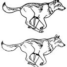 Wolf running sketches, second round by silvercrossfox on DeviantArt