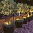 Trees In Pots